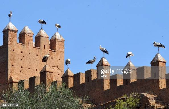 Stocks rest atop the rampards of the archealogical site of Chellah the site of the ruins of the ancient Roman town known as Sala Colonia part of the...