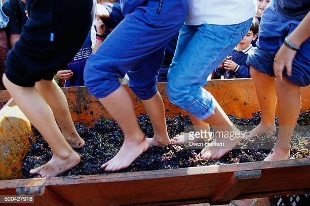 Stomping Grapes with Bare Feet
