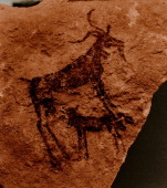 Stone Age rock painting of a goat and calf possibly from the Cattle Period Algeria Stone Age Prehistoric Tassili N Ajjer