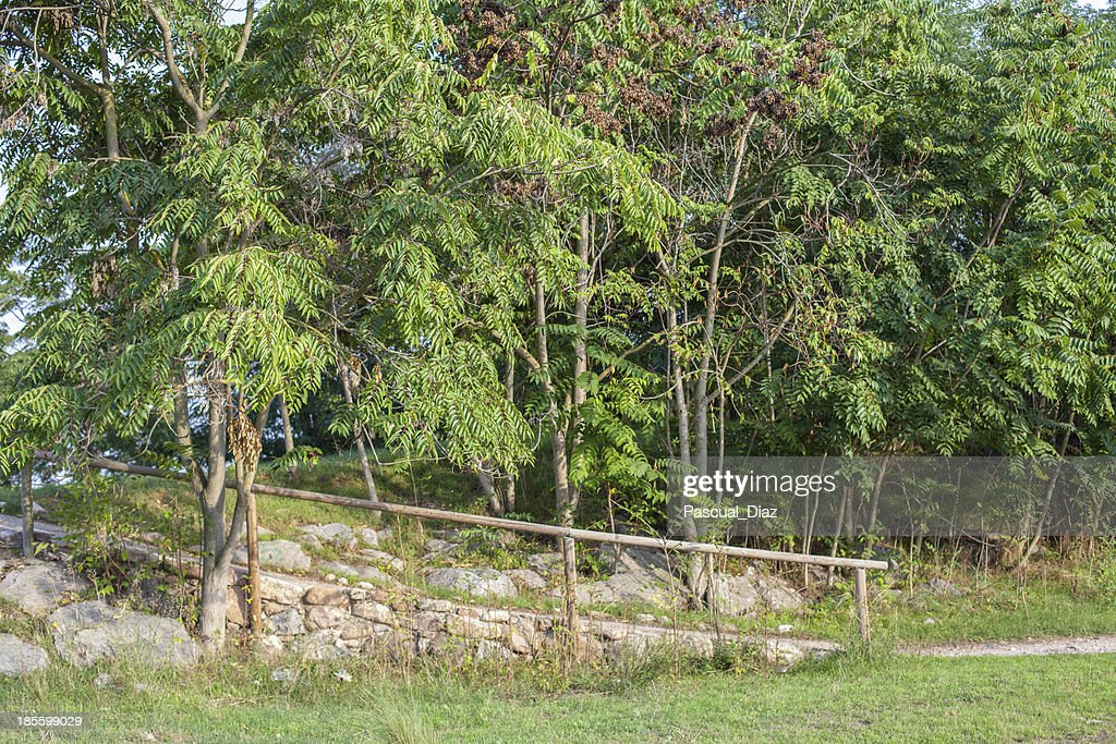 Subida de piedra con barandilla stock photo getty images - Barandillas de piedra ...