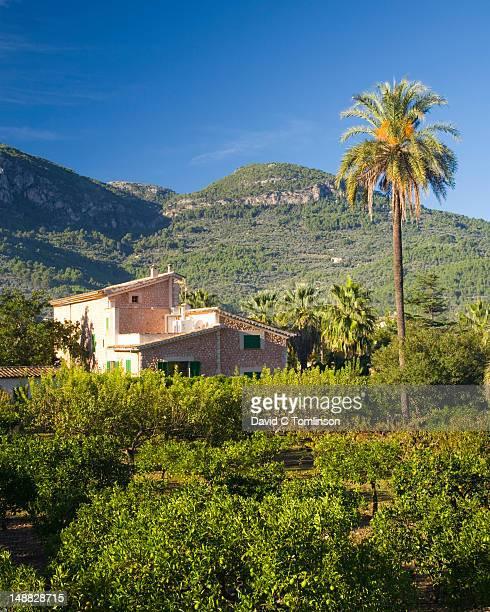 Stone farmhouse amongst palm-trees in the Soller valley.