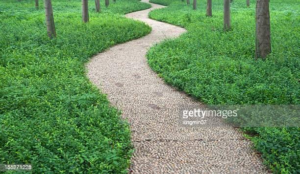 stone Footpath in Garden