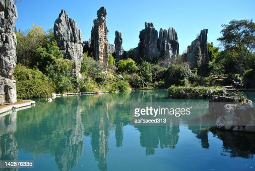 Stone Forest Reflections