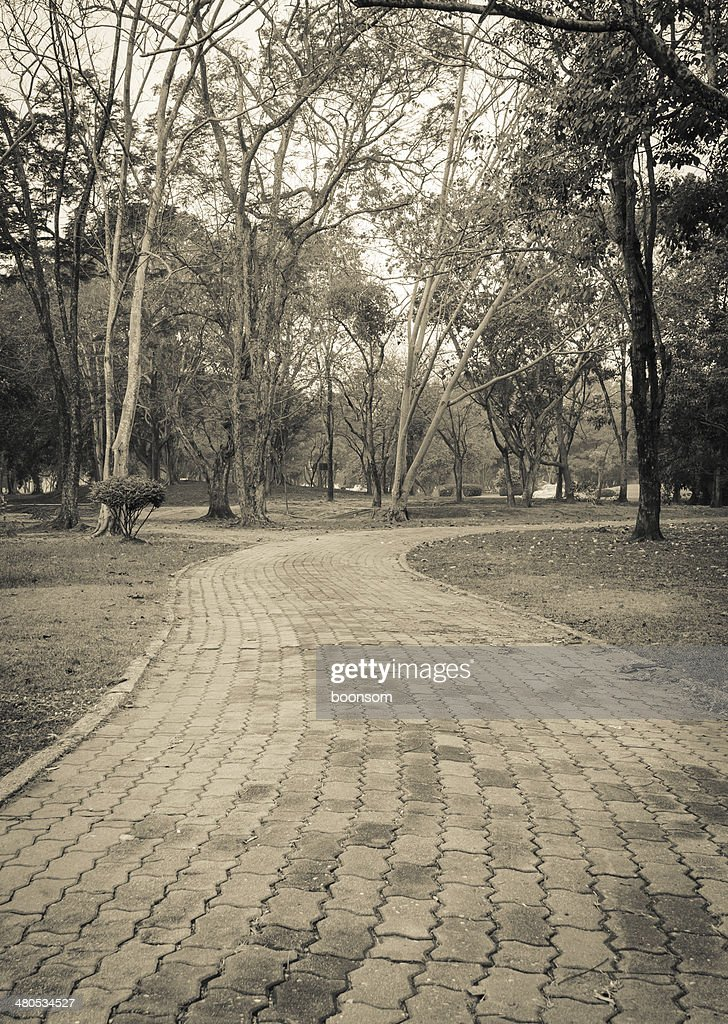 Stone pathway : Stock Photo