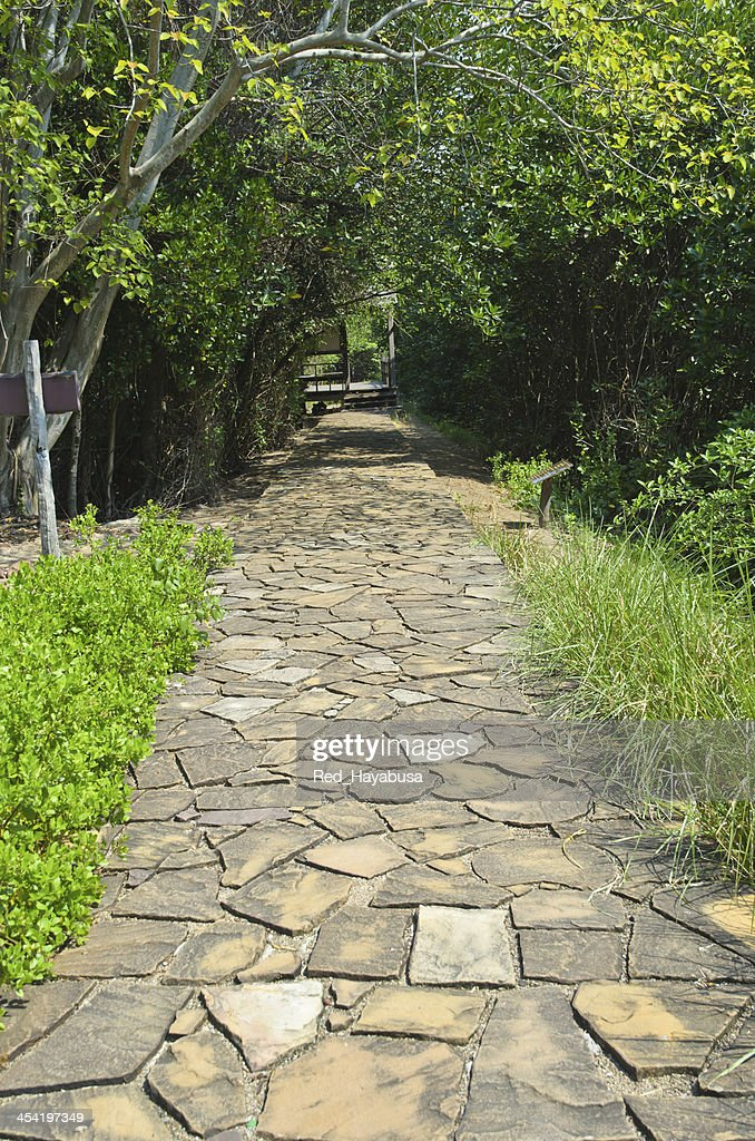 stone road in a forest : Stock Photo
