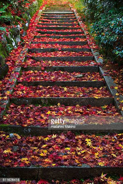Stone Steps Covered with Fallen Leaves