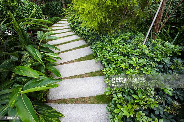 Stone walkway winding its way through tranquil garden