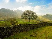 Stone wall in rural landscape