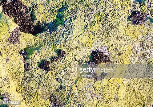 Stone with lichen (background). : Stock Photo
