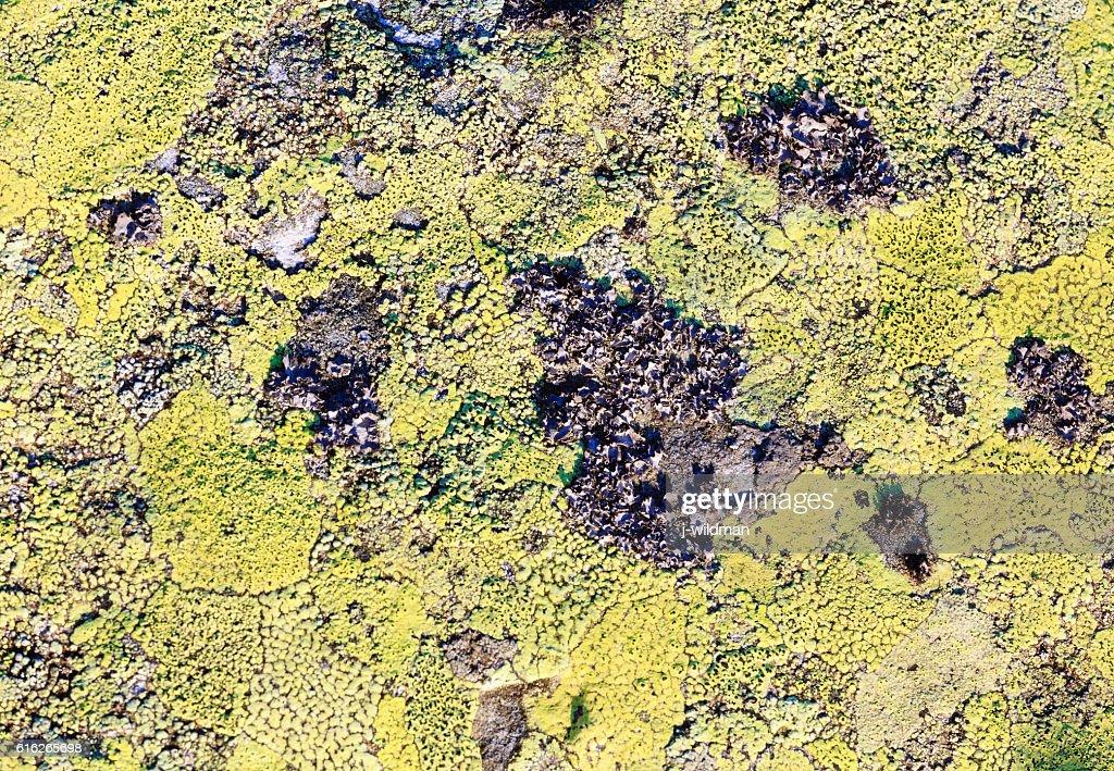 Stone with lichen (background). : Stock Photo