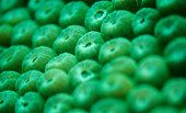 Macro shot of stony coral (hard coral) in the Caribbean sea off the northern coast of Colombia (Taganga, Santa Marta).