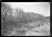 bare trees at the edge of an unidentified pond or lake New York New York late 19th or early 20th century