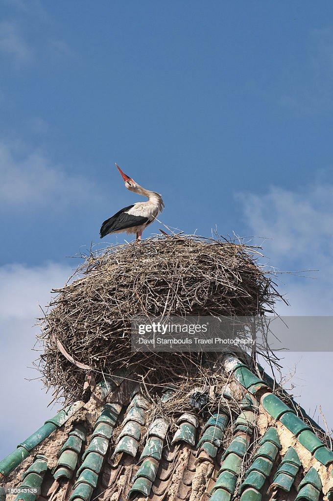 Stork above medina in Marrakech : Stock Photo