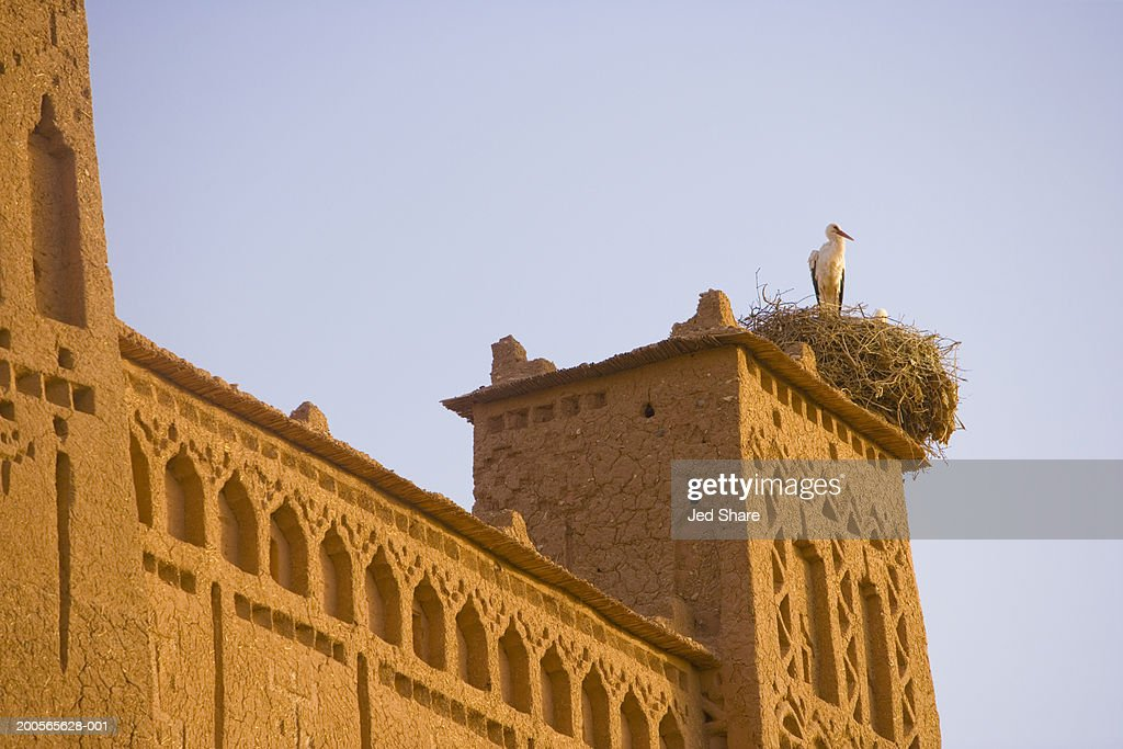 Stork atop of building exterior, low angel view : Stock Photo