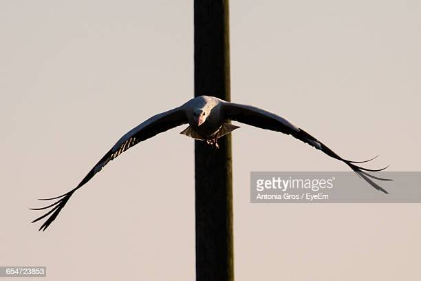 Stork Flying By Pole Against Clear Sky
