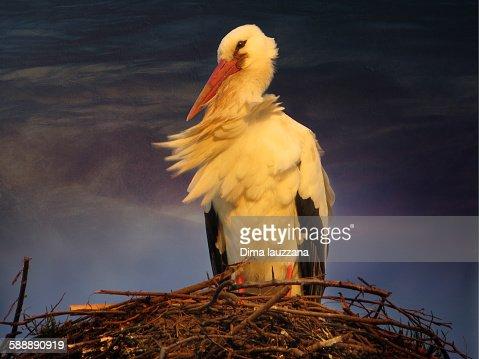 Stork in the wind