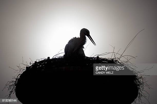 A stork is pictured in its nest on March 2 2016 in Gerstungen / AFP / dpa / Candy Welz / Germany OUT