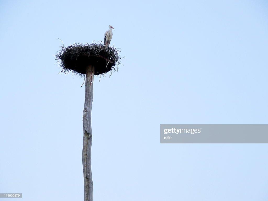 Stork nest : Stock Photo