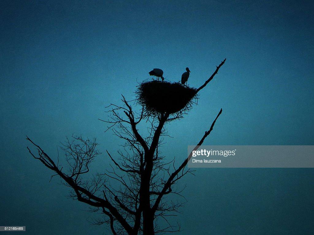 Stork nest silhouette