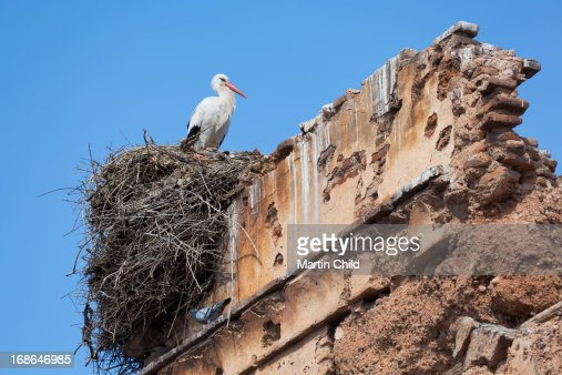 stork nesting on the top of a ruin : Stock Photo