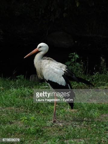 Stork Perching On Grassy Field At Forest