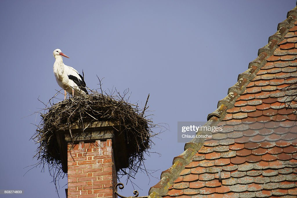 Stork sitting on nest, Catheral Munster : Stock Photo