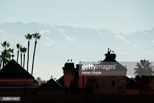 Storks in Nest Silhouette - Marrakesh - Morocco : Stock Photo