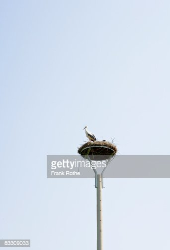 stork´s nest : Stock Photo