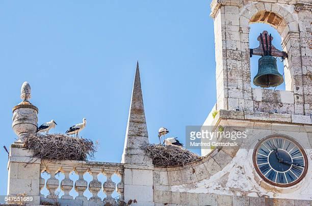 Storks nesting on Faro roofs