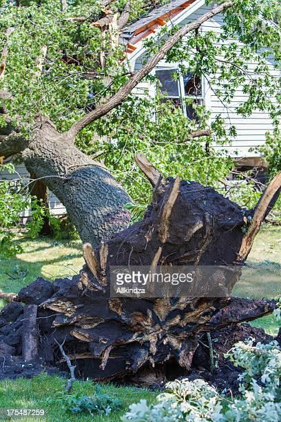 storm blown oak hits house vert