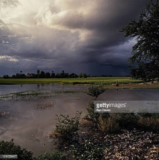 Storm clouds gather over the flooded rice fields of Cambodia during the annual monsoon The country is one of the most fertile in Southeast Asia...