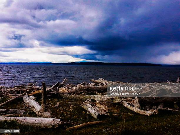 Storm clouds over driftwood anf beach