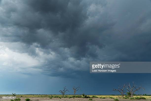 Storm clouds over landscape, Kasane, Chobe National Park, Botswana, Africa