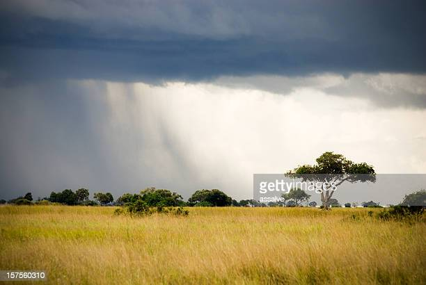 Sturm kommt auf afrikanische Savanne in