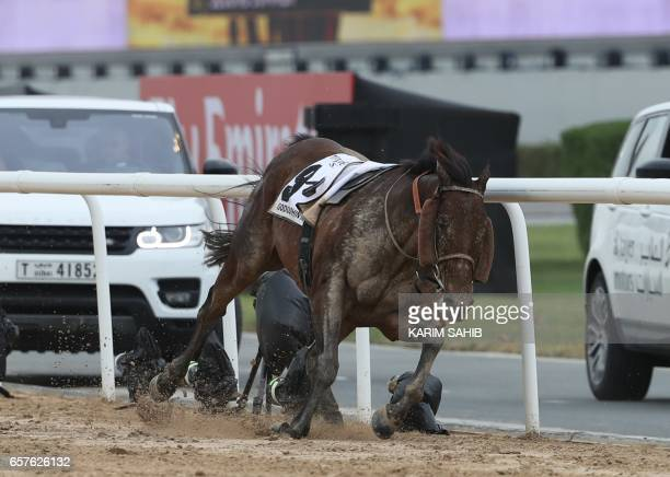 Stormaral ridden by jockey Adrie de Vries falls during the Godolphin Mile horse race at the Dubai World Cup in the Meydan Racecourse on March 25 2017...