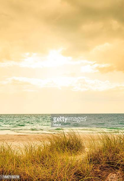 Stormy Beach - Vintage Golden Colors