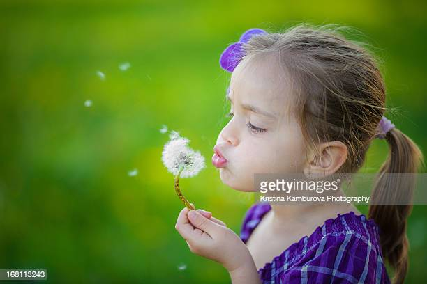 A story with a dandelion