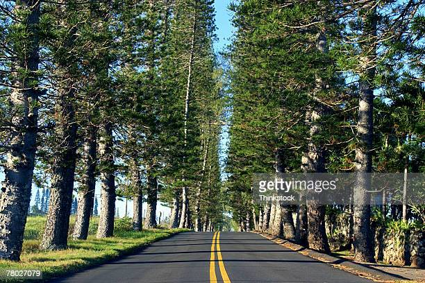 A straight road lined with trees in Hana, Hawaii.