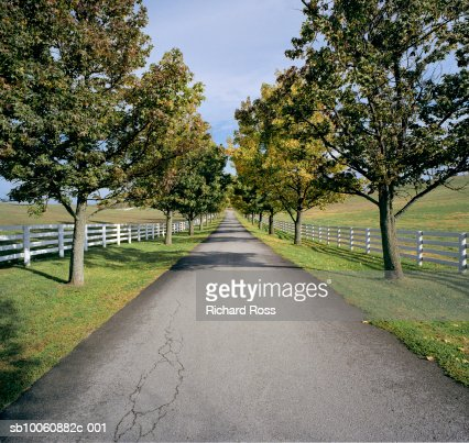 Straight tree lined road in rural landscape : Stock Photo
