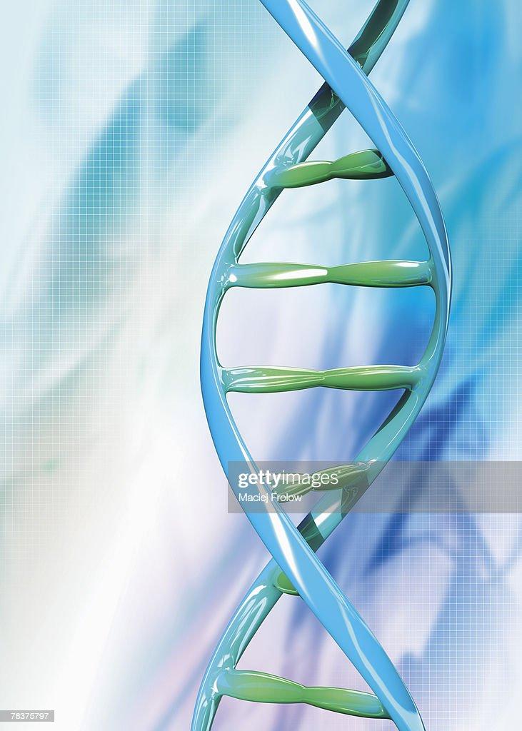 DNA strand : Stock Photo