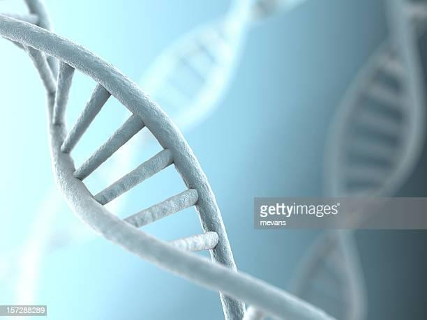 Brins d'ADN