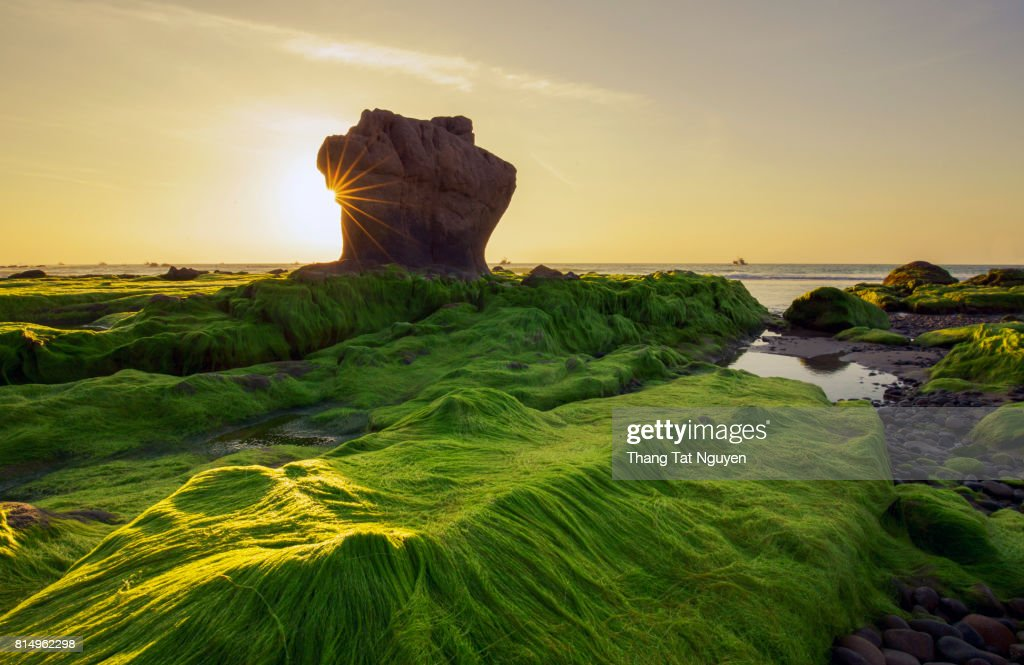 Strange rocks and moss in the morning at Co Thach beach Tuy Phong Binh Thuan province Vietnam  Stock Photo