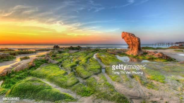 Strange rocks and moss in the sunrise Vietnam