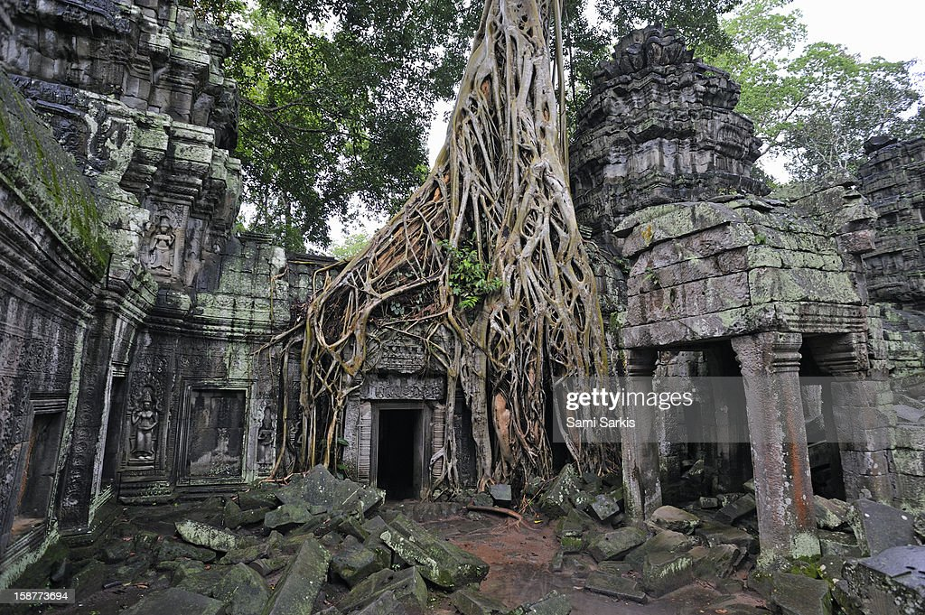 Strangler fig tree roots on temple : Stock Photo