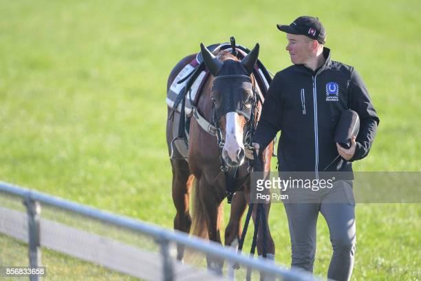 Strapper Matt Scown with Admire Deus at Werribee Racecourse on October 03 2017 in Werribee Australia