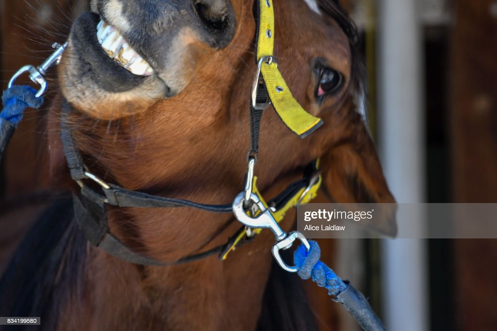 Strappers get horses ready before The Legendary Clem DeRosa SV 3YO Maiden Plate at Mildura Racecourse on August 18, 2017 in Mildura, Australia.