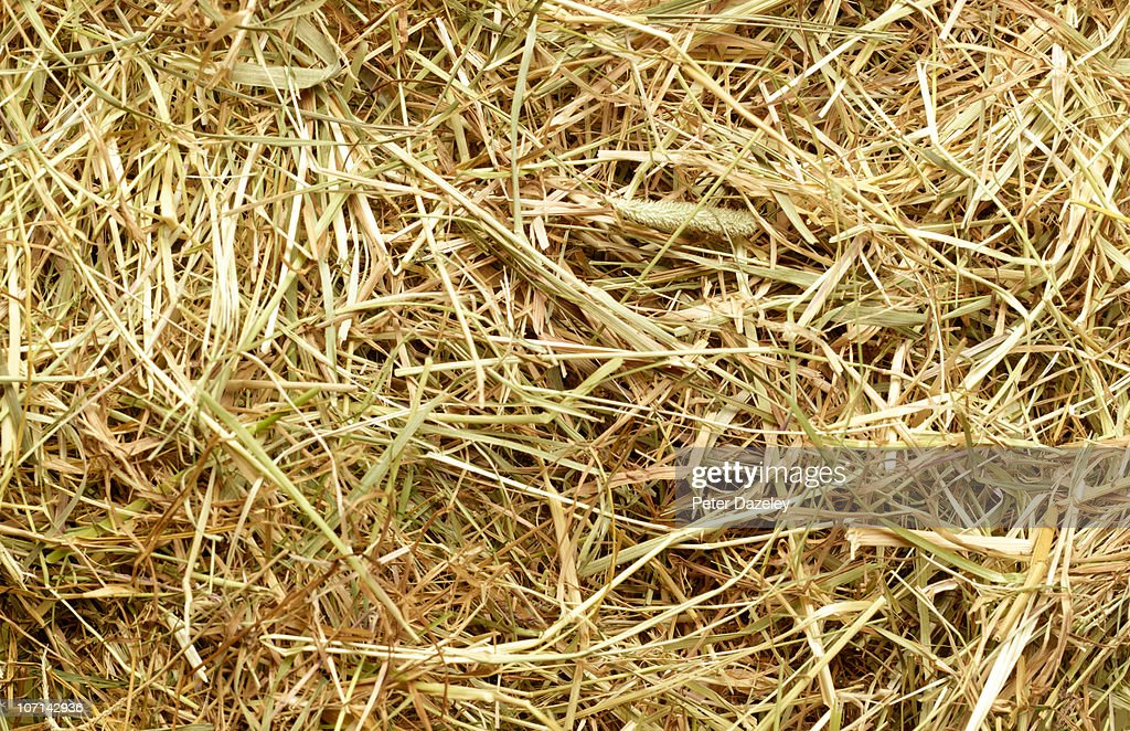 Straw and grass full frame background : Stock Photo