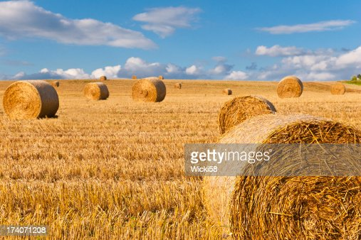 Straw Bales at a Stubbel Field
