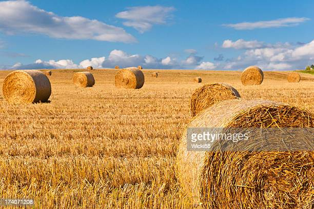 Straw Bales in einem Stubbel Field