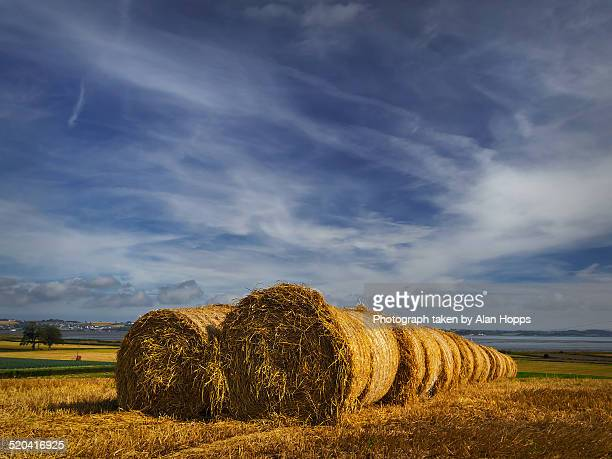 Straw bales in a row